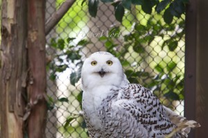 ズーラシアは1日中楽しめるナイスな動物園
